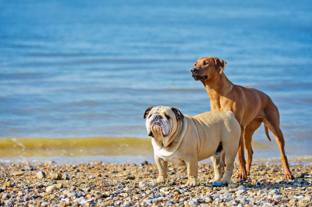 Two dogs outside on the beach