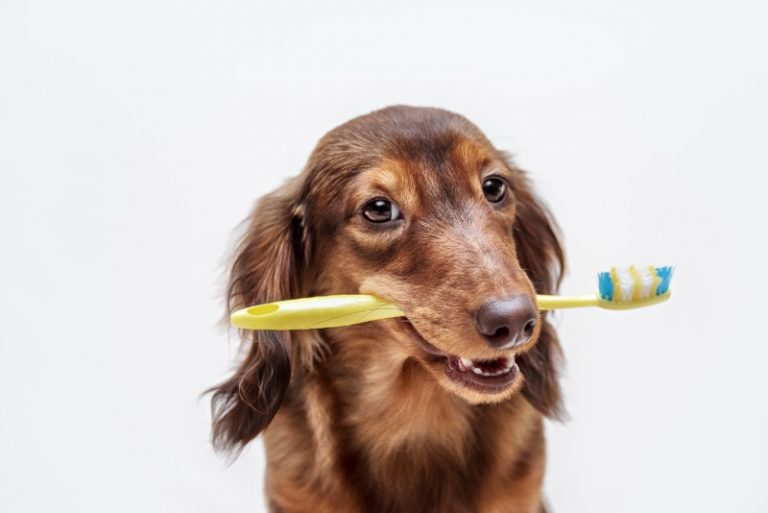 Medium sized dog holding a toothbrush in its mouth