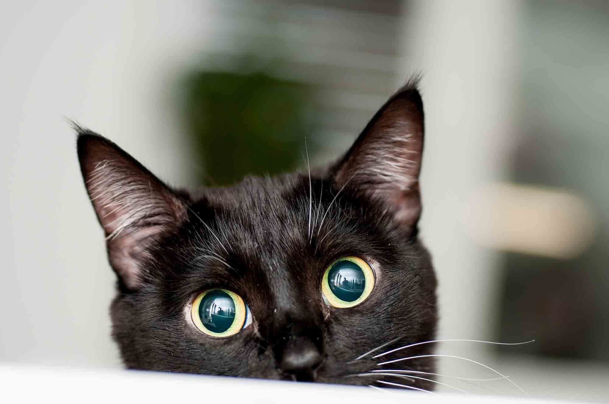 A black cat, with wide eyes, peeks up at the camera.